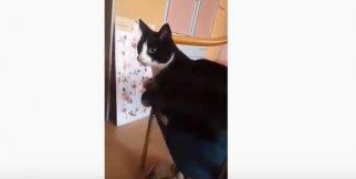 Kendi kuyruğundan dayak yiyen kedi - OHA Haber